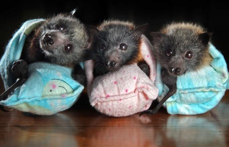 The Surprising Reasons Humans Need Bats
