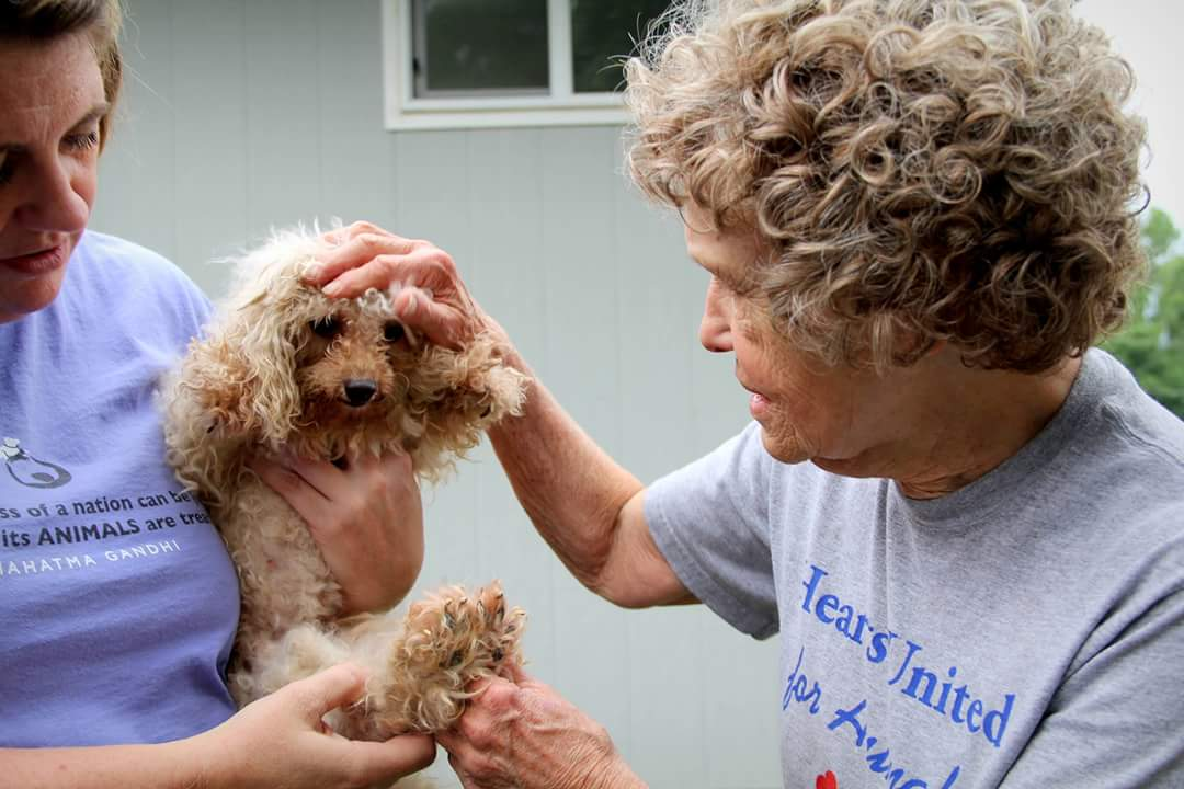 5 Organizations Helping to Spread the Words About Puppy Mills