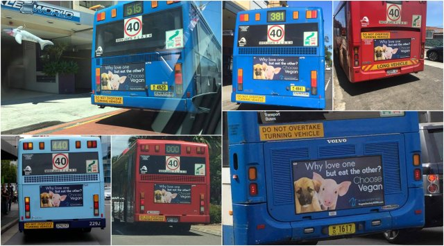 1575303-Bus_Collage_2.w640