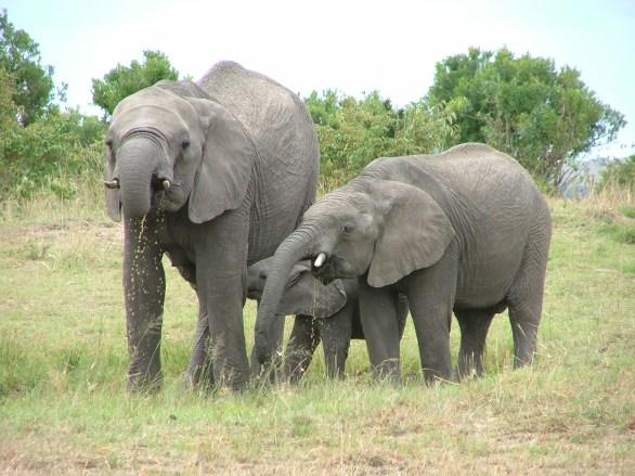 elephants-1471588