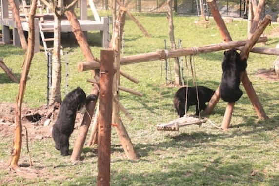 bears playing 1