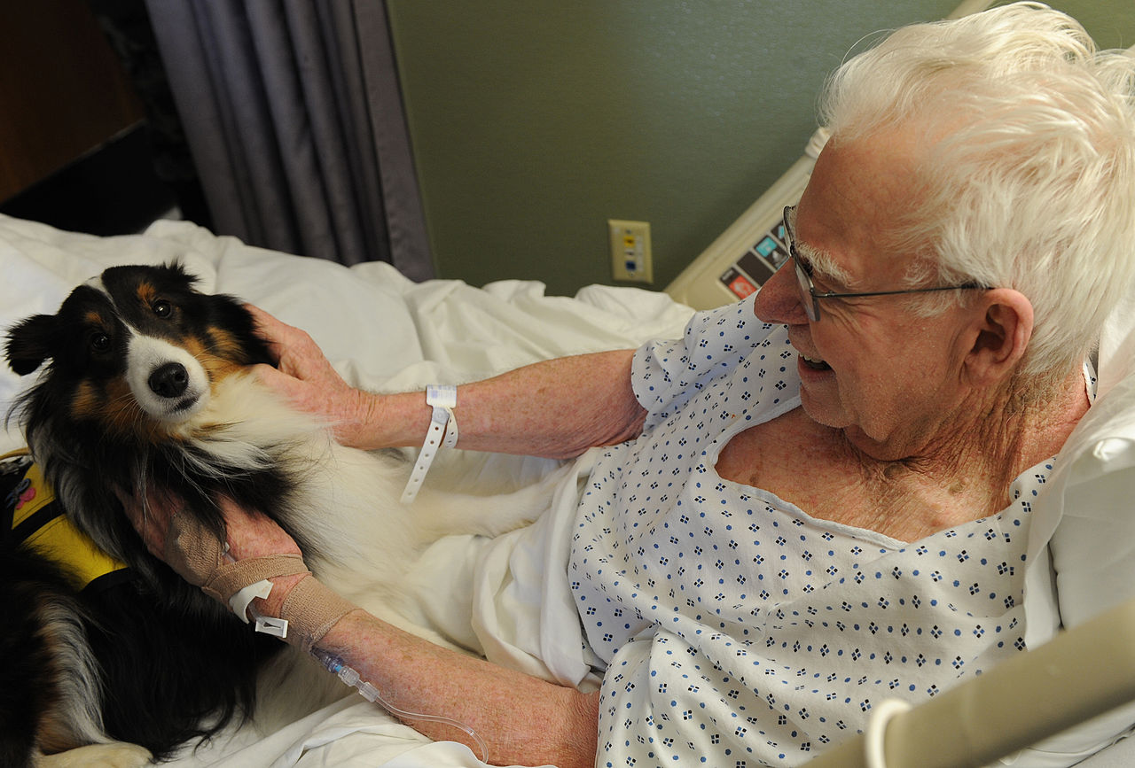 From Hospitals to Airports—How Dogs Are Helping People and Saving Lives