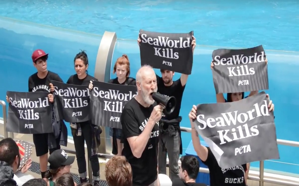 Actor James Cromwell Helps Stage Protest at SeaWorld –Urging Park Goers to Stop the Abuse! (VIDEO)
