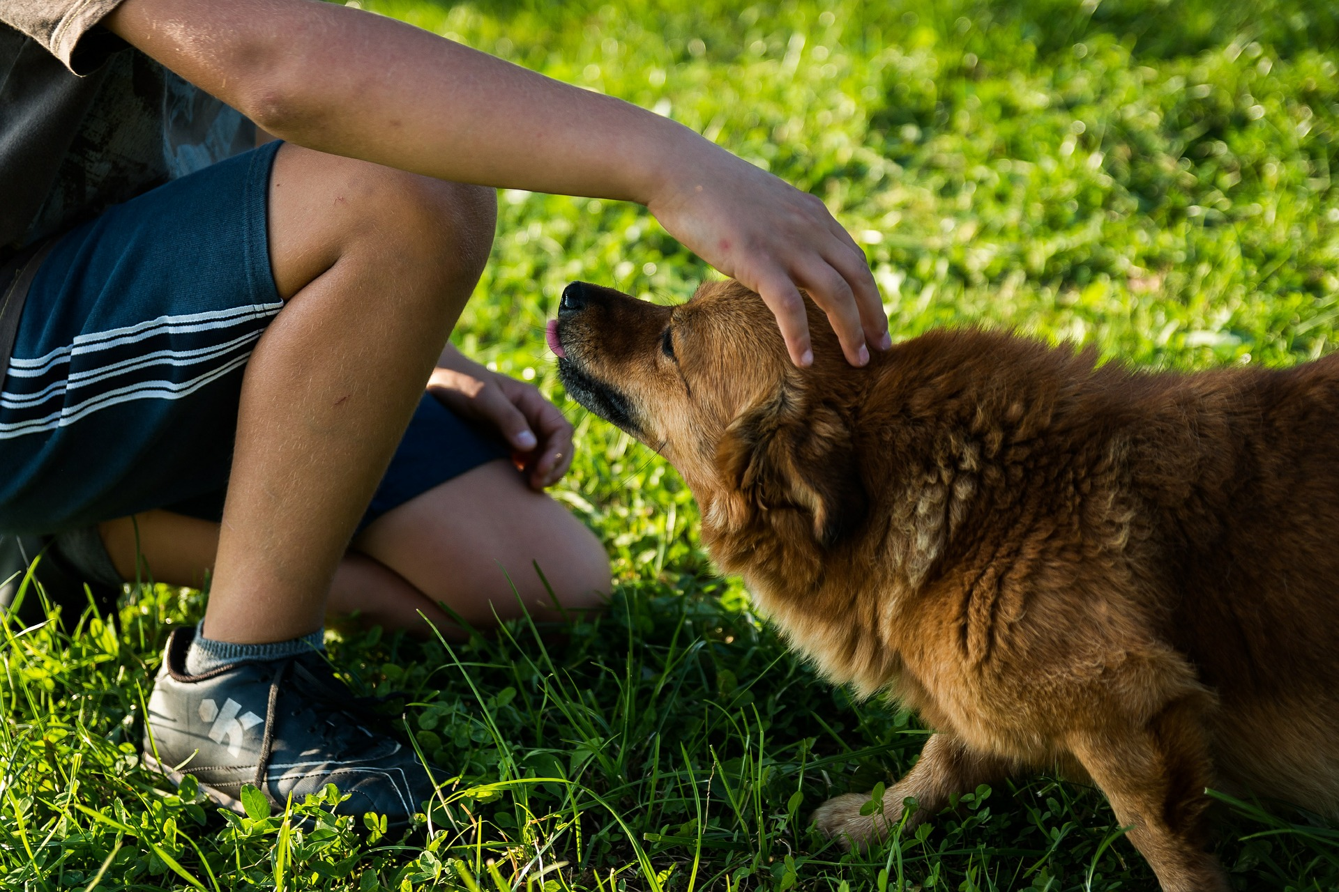 how to create a pet friendly space in your yard one green planet
