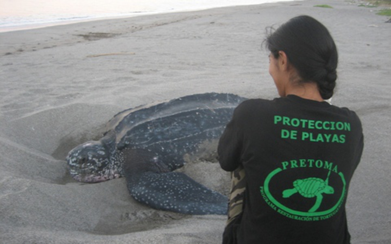 These Marine Protection Groups Will Inspire You to Stand Up For Our Oceans