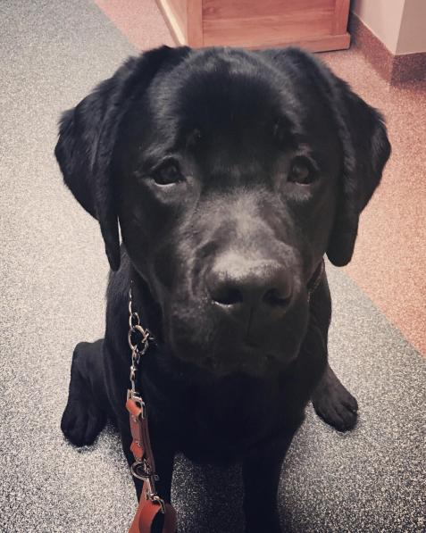 Meet the Black Lab Who Comforted the Women Who Came Forward Against Larry Nassar