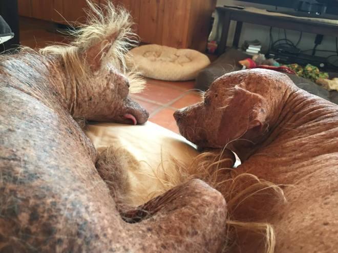 Marley S Hope Dog Rescue
