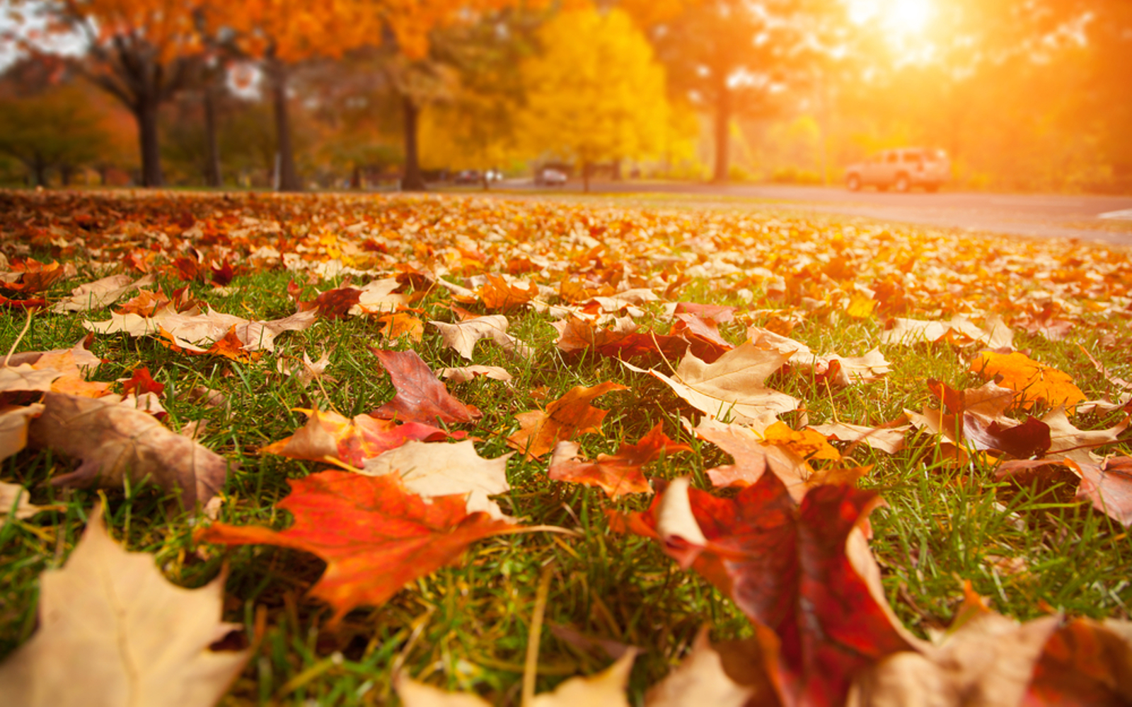 Autumn leaves on grass landscape