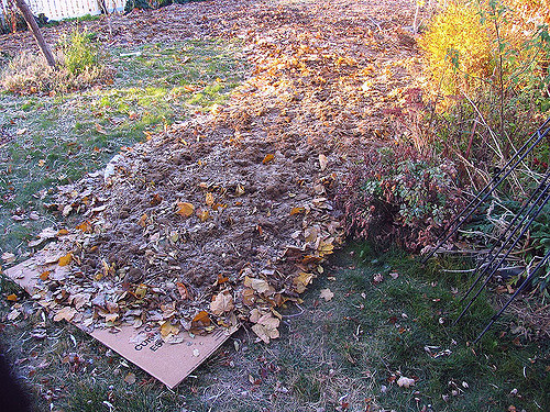 How to Deal With Compacted Soil in Your Garden