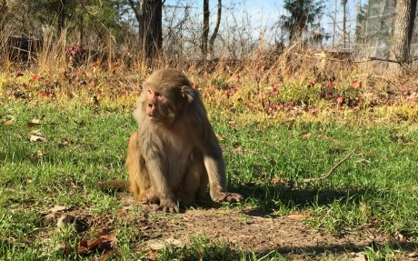 Monkeys Saved From Exotic Pet Trade and Research Industry Get a Beautiful New Home