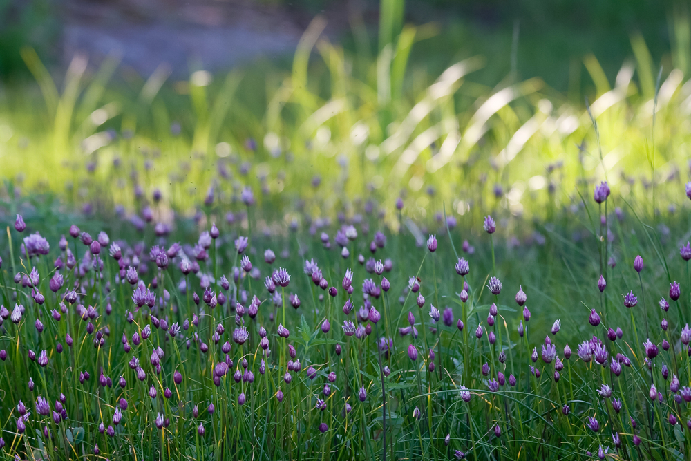 11 Plants You Can Forage in Spring