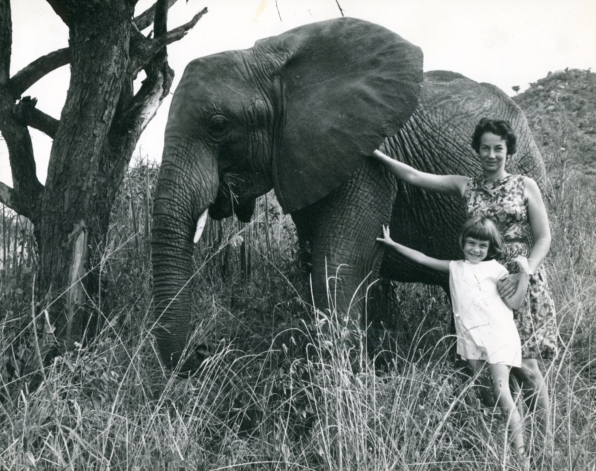 Rhino female dispersed herd of elephants