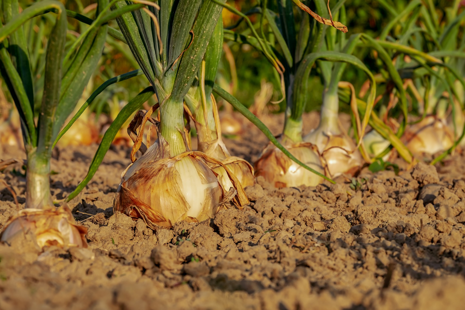 Fall Veggie Garden: What And When to Plant, and Cold Weather ...