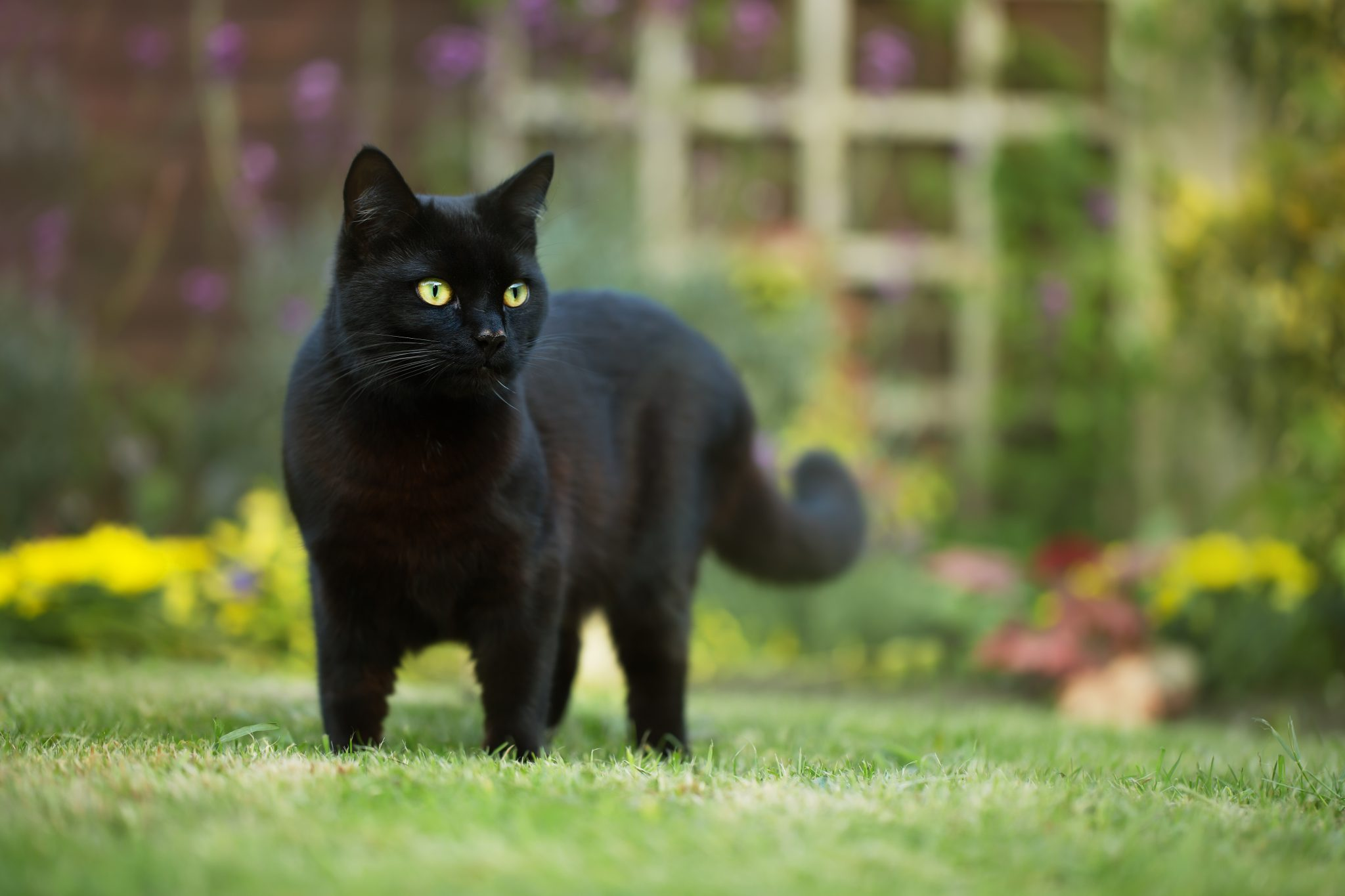 Petition: Black Cats Killed and Ground Up into Paste as Misleading Coronavirus Treatment