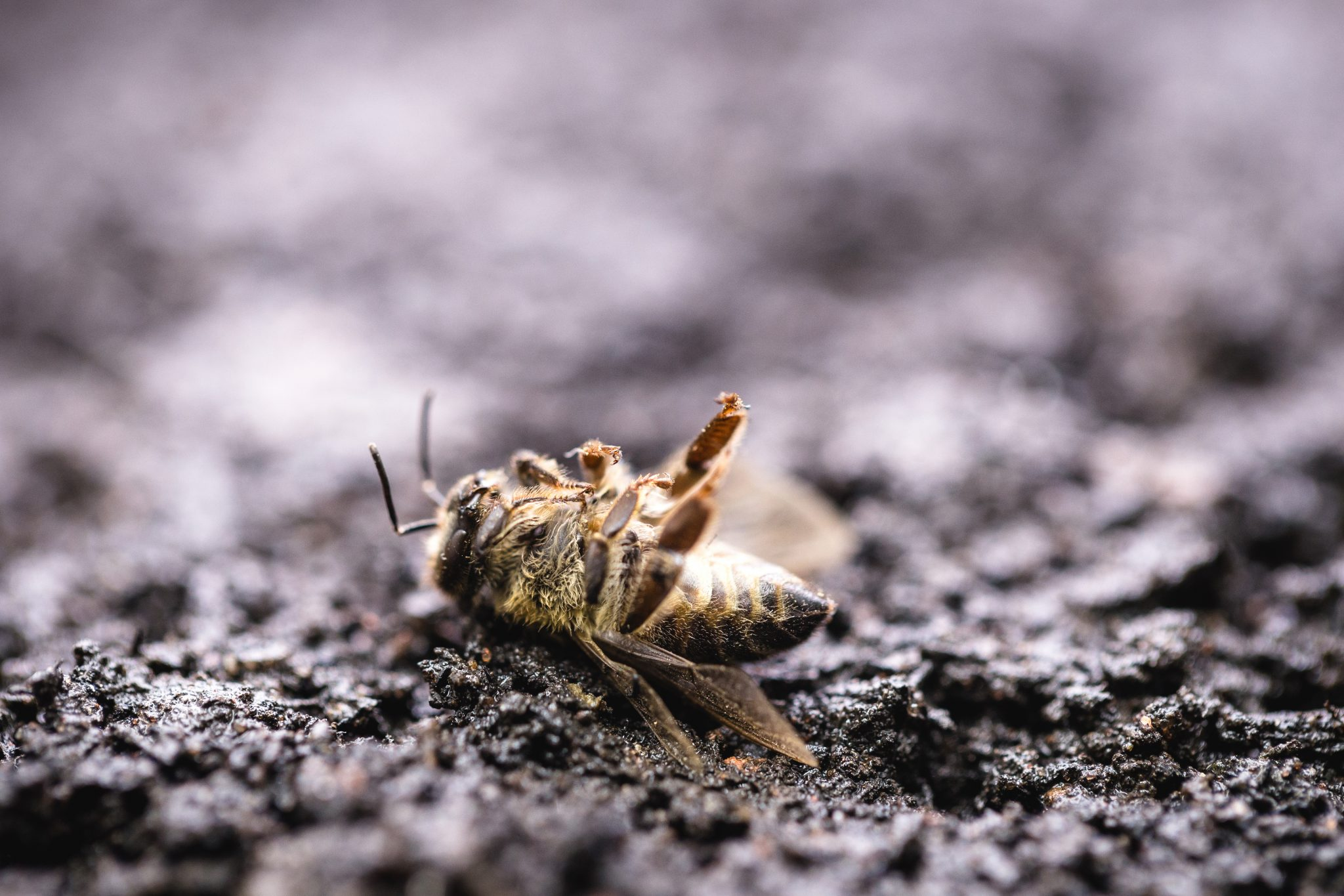 Petition: Tell the EU to Ban Neonicotinoids, Pesticides that Kill Bees