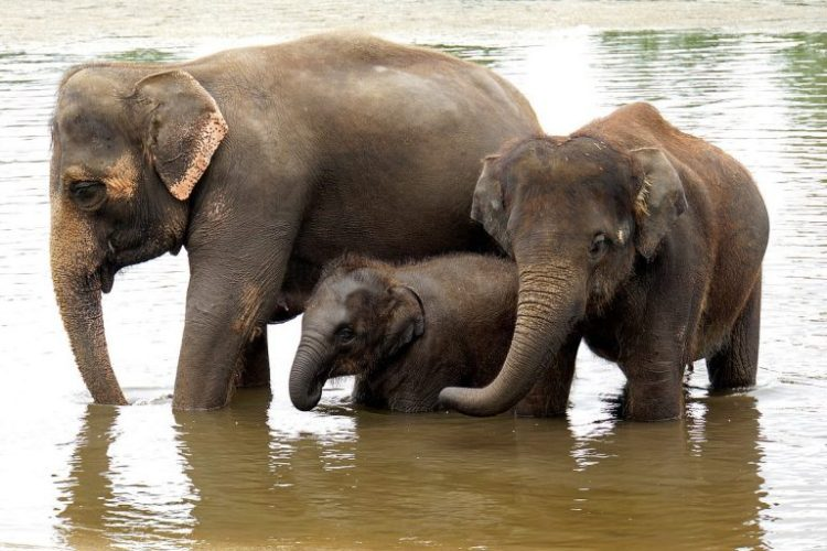 Push for Ban on Advertising Unethical Elephant Tourism in the UK Gains Momentum
