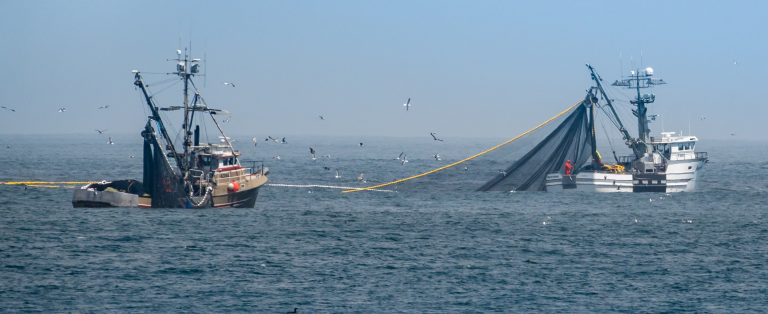 Chinese Fishing Fleets are Depleting the World's Oceans