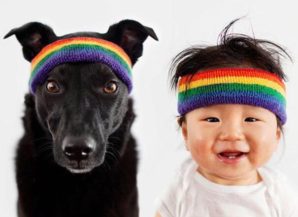 hond met hoofdband