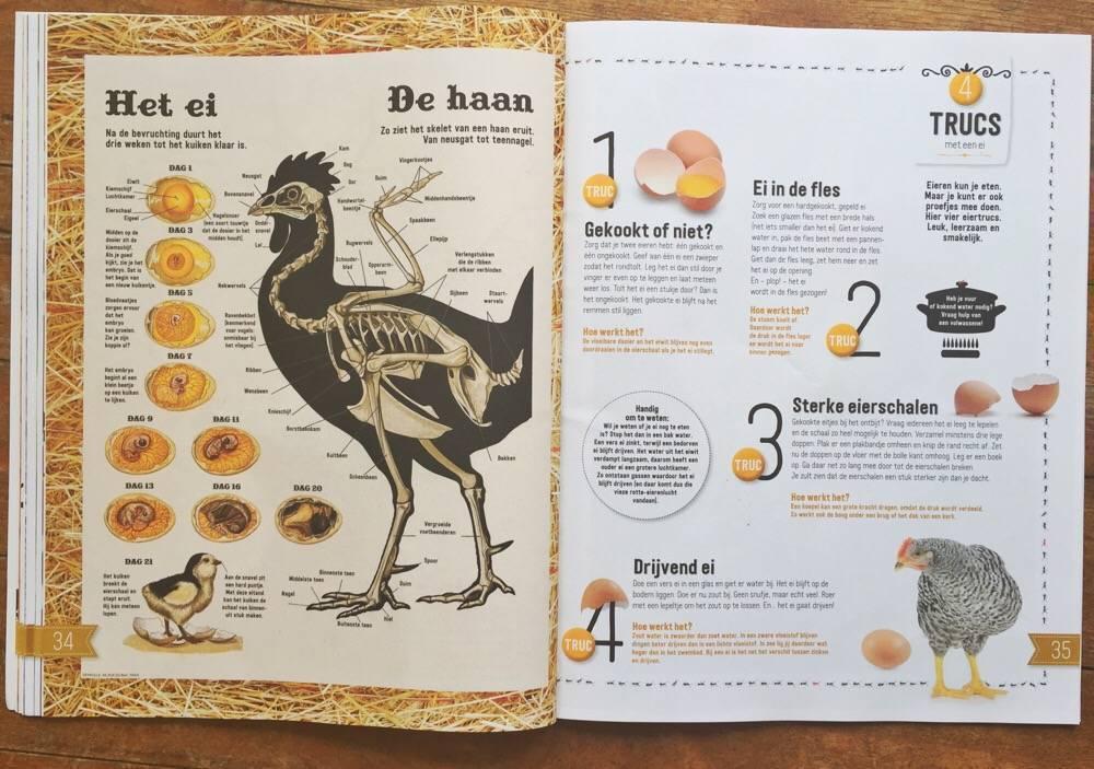 Het ei - Roots doe-boek