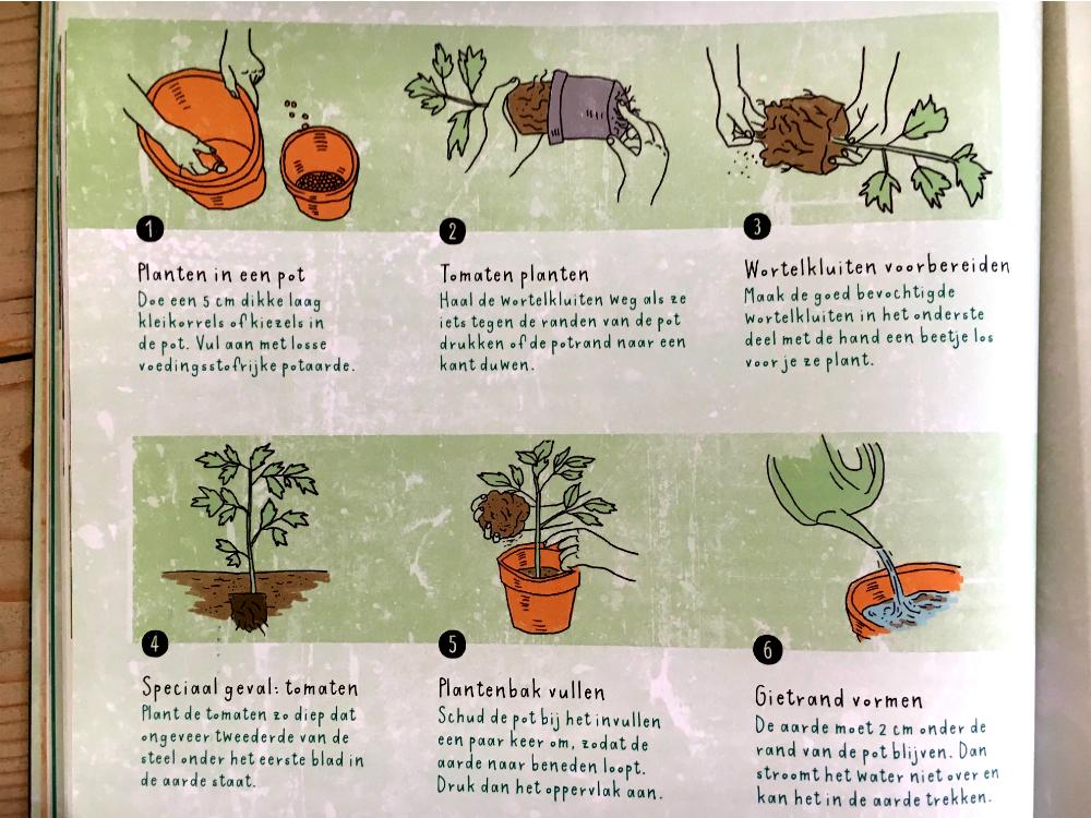 uitleg moestuin planten in pot zetten