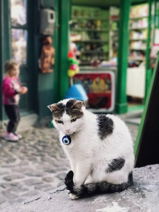 katten op Lesbos