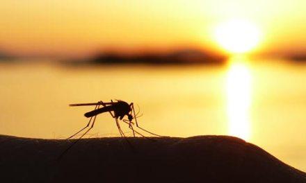 10 natuurlijke tips tegen muggen
