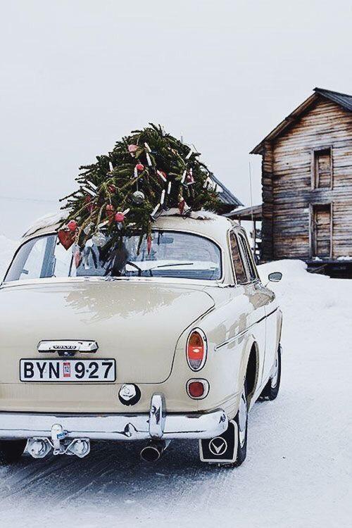 kerstbomentraditie