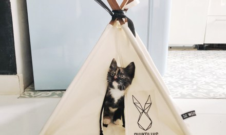 Winnen: 2x een toffe kattentipi