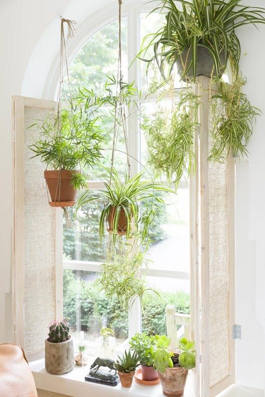 verzameling graslelie planten