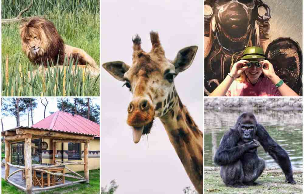 Op safari in Brabant: 5 Beekse Bergen tips