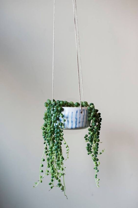 string of pearls tips
