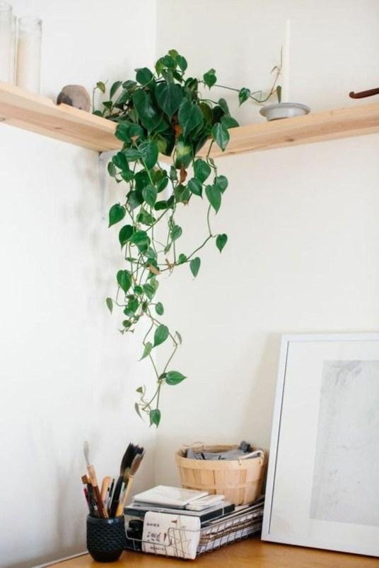 hangplanten inspiratie