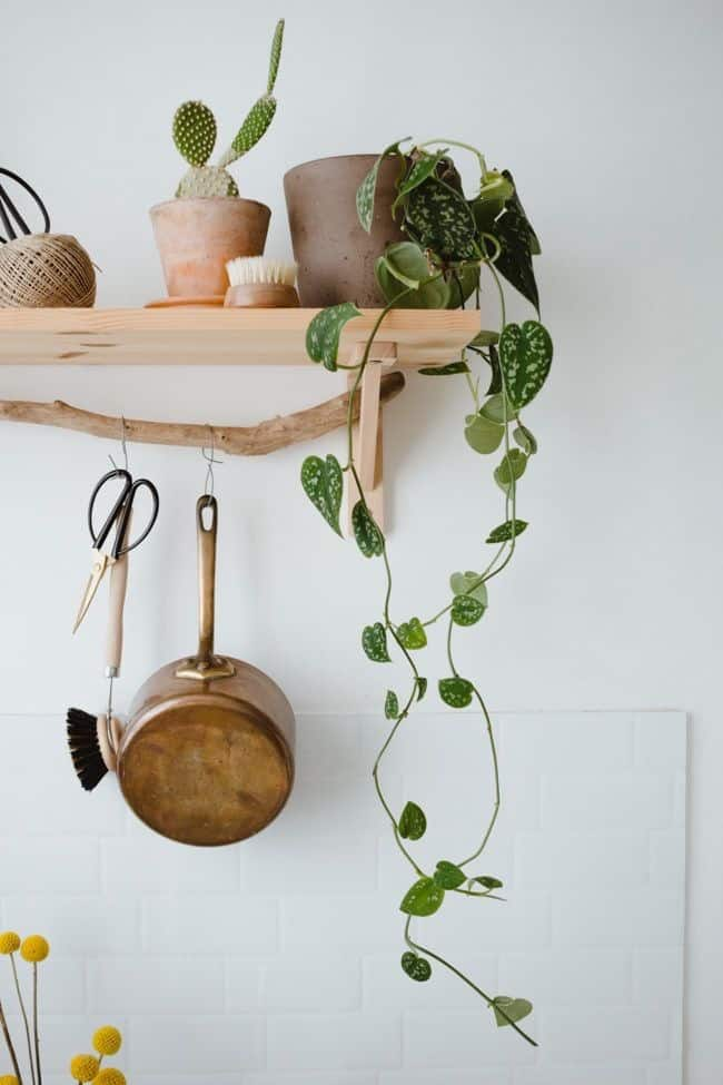 hippe hangplanten