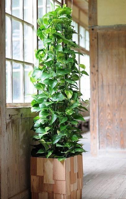 mosstok plant