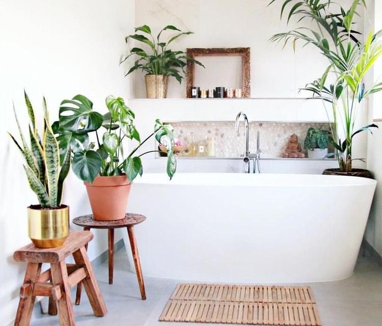 Planten in de badkamer? Dit zijn 6 toppers