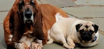 Casting Dogs in Albuquerque