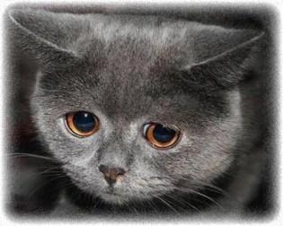 Stressed-kitty-crop