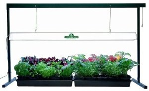 mavis garden blog what to plant in your fall vegetable. Black Bedroom Furniture Sets. Home Design Ideas