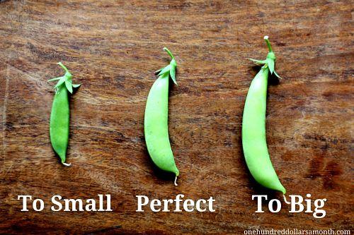 Mavis Garden Blog - When to Pick Sugar Snap Peas - One