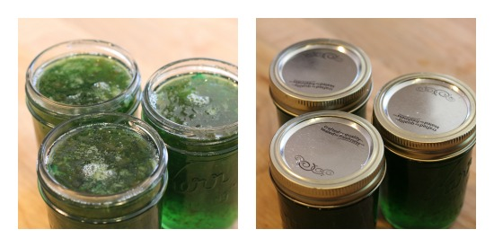 canning jalapeno pepper jelly recipe