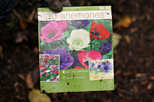anemone bulbs package