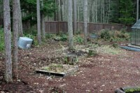 Mavis Butterfield   Backyard Garden Plot Pictures  Week 4 ...