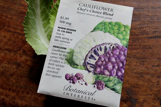 white purple green cauliflower