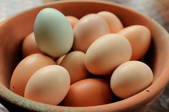 fresh eggs blue and brown