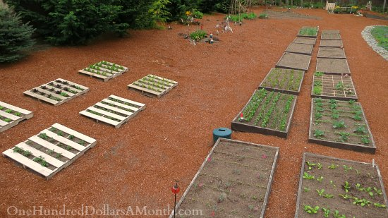 raised garden beds how to garden