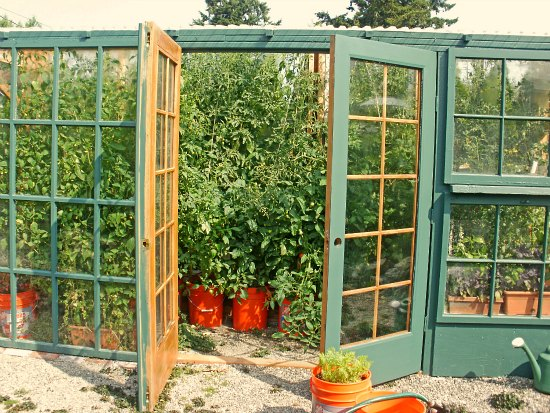 Greenhouse garden pictures tomatoes