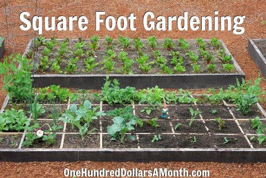 square foot gardening images