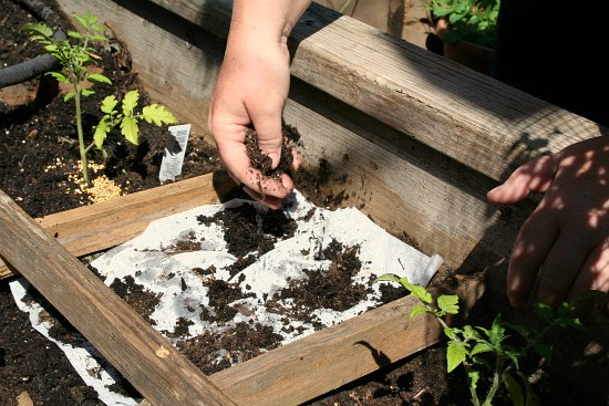 start seeds in paper towels
