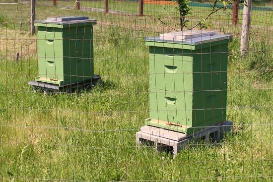 bee hive boxes