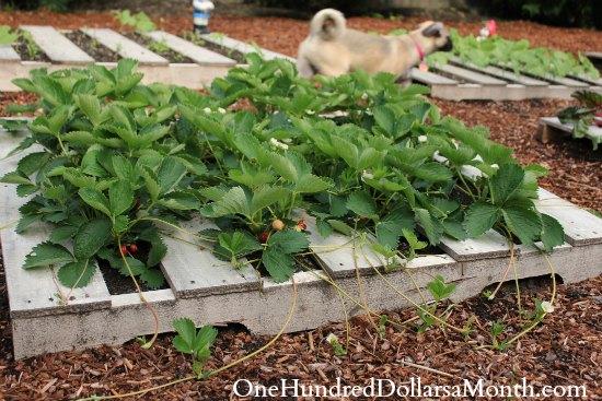 pallet gardening strawberries